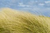 Les herbes folles dans le vent — Photo