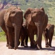 Elephant family outing — Stock Photo #61866143