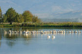 Agamon Hula bird refuge — Stock Photo
