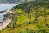 Landscape in Kauri — Stock Photo