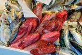 Mercado de pescado, venecia — Foto de Stock