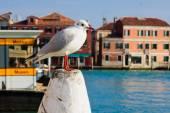 Murano, Venice — Stock Photo