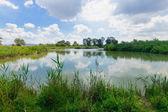 Humedal, En Afek — Foto de Stock