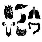Vector organ anatomy — Stock Vector