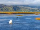 Fulmar and Iceland Landscape — Stock Photo