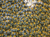 Wild Himalayan bees — Stock Photo
