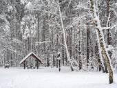 Pequeño refugio en el bosque nevado — Foto de Stock