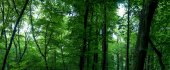 Huge forest panorama — Stock Photo