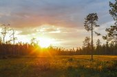 Sun shines through the forest — Stock Photo