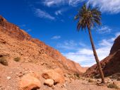 Palm tree in Todra gorge — Stock fotografie