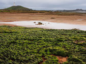 Geothermal field of Gunnuhver — Stock Photo