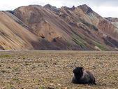 Landmannalaugar fjallabak 自然保护区 — 图库照片