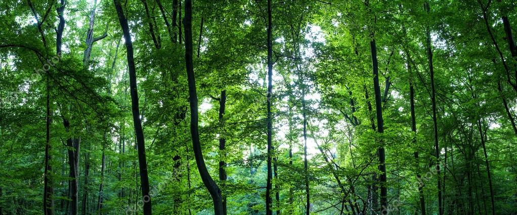 Фотообои Огромный лес панорама