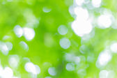 Green leaves on the background blurry — Stock Photo