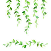 Wavy green branches — Stock Photo