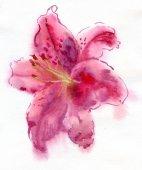 акварель лили — Стоковое фото