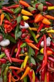 Chili-pfeffer - paprika — Stockfoto