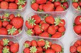 Strawberry - fragaria vesca. — Stock Photo