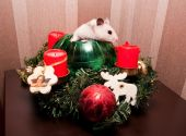 Little hamster in christmas tree — Stock Photo