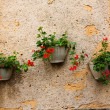 Wall and three pots of geranium plants — Stock Photo #52746633