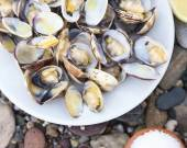 Cooked Clams — Stock Photo