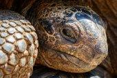 Giant turtles — Stock Photo