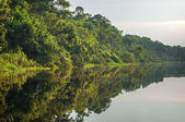 River in the Amazon Rainforest, Peru, South America — Stock Photo
