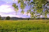 Rural landscape — Foto Stock