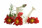 Country watering can with poppy flowers — Stock Photo