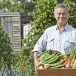 Senior Man On Allotment With Box Of Home Grown Vegetables — Stock Photo #53889849