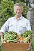 Senior Man On Allotment With Box Of Home Grown Vegetables — Stock Photo