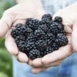 Close Up Of Man Holding Freshly Picked Blackberries — Stock Photo #53890219