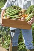 Close Up Of Man On Allotment With Box Of Home Grown Vegetables — Stock Photo