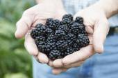 Close Up Of Man Holding Freshly Picked Blackberries — Foto de Stock