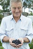 Senior Man On Allotment Holding Freshly Picked Blackberries — Stock Photo