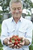 Senior Man On Allotment Holding Freshly Picked Strawberries — Stock Photo