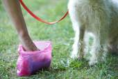 Owner Clearing Dog Mess With Pooper Scooper — Stock Photo