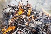 Campfire on nature — Stock fotografie