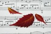 Three autumn leaves on a notes. — Foto de Stock