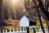 The titmouse flies up to a feeding trough in sun beams — Stock Photo