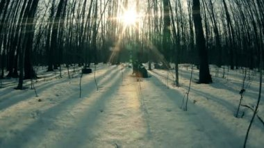 Sunset in snow winter wood. Timelapse. — Stock Video