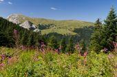 Ilgaz Mountains, Kastamonu, Turkey — Stock Photo
