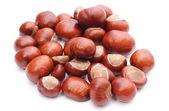 Closeup of chestnut on white background — Stock Photo