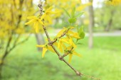 Twig tree with blooming flowers in spring — Stock Photo