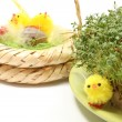 Easter chickens and green watercress on cotton pad — Stock Photo #67372653
