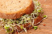 Wholemeal bread with alfalfa and radish sprouts — Stock Photo