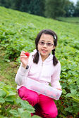 Asian Girl Picking Strawberries — Stock Photo