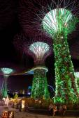 Supertree Grove at Gardens by the Bay in Singapore — Stock Photo