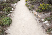 Sandy trail with stones and flowers — Stock Photo