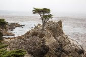 Cliff with tree on sea shore — Stock Photo